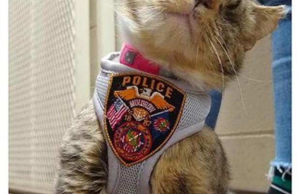 Ms. Kitty gets a Visit from Pawfficer Fuzz